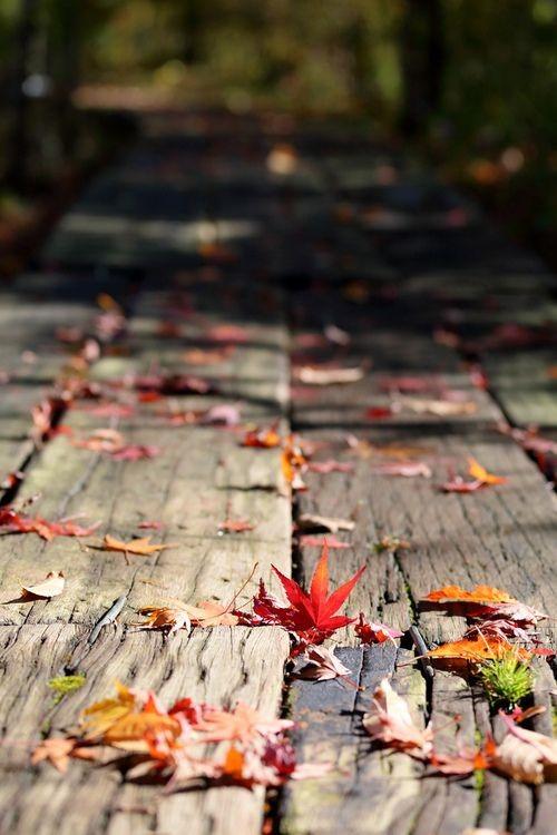 Calendrier photo avec des feuilles d'automne