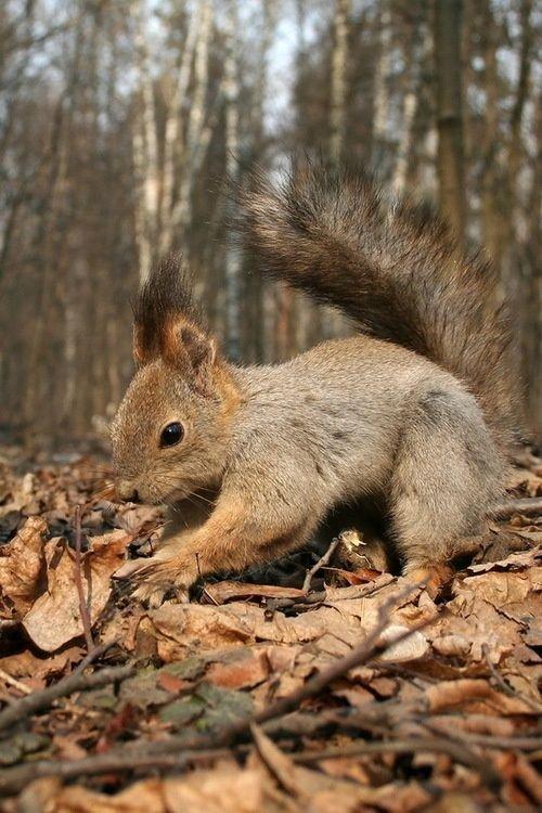 Calendrier photo avec un écureuil