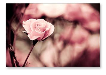 MAgie des fleurs
